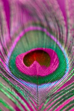 "thecultress: ""  Peacock Feather by Rapplatt   found on redbubble.com """
