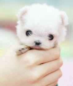 Daily Awww: Oh hai cute animals, so good to see you (28photos) - cute-animals-4