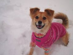 Our Nella (former shelterdog) was elected to one of the happiest dogs with a pretty smile -photo contest in Finland