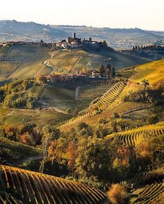 Take a tour of the beautiful Vineyards, Tuscany, Italy.