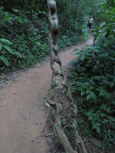 Cipó trilha da Cachoeira do Roncador - Palmas - TO
