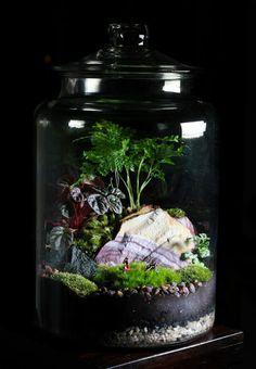 Bonbonnière en verre pour vos plantes vertes