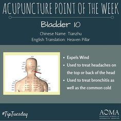 #TipTuesday:#Acupuncture Point of the Week, Bladder 10! #integrativelife