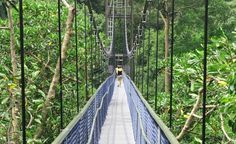 If you enjoy trekking and nature walks, then explore the HSBC TreeTop Walk, a 250 m aerial free standing suspension bridge spanning Bukit Peirce and Bukit Kalang completed in July 2004 which are the two highest points in  MacRitchie Reservoir Park. It gives you a bird's eye view of the rainforest canopy. How to get there: Nearest MRT station at Marymount MRT (Circle line) located 2km away from MacRitchie Reservoir Park.