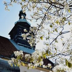 spring in Graz - Graz Cathedral Cathedral, Photo And Video, Spring, Instagram, Graz, Cathedrals