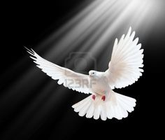 Learn surprising facts about dove spirit animal. Love, purity, nurturing, spirituality, and peace. White doves are rare in the wild. Dove Images, Dove Pictures, Pigeon Pictures, Jesus Pictures, Santas Tattoo, Dove Flying, Dove Tattoos, Mourning Dove, Christian Symbols
