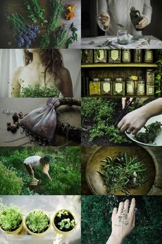"skcgsra: "" herbalist aesthetic (requested) more here // request here """