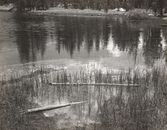 1940 Yosemite National Park [pine trees reflected in rippled pool, grass, two narrow logs] by Ansel Adams 84.91.185
