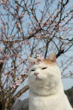 桃の花。 Kittens Cutest, Cute Cats, Cats And Kittens, Funny Cats, Pretty Cats, Beautiful Cats, Cute Cat Wallpaper, Cat Icon, Cat Aesthetic