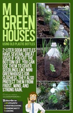 Mini Green Houses!! - DIY
