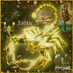 scorpio Zodiac sign skorpion sternzeichen