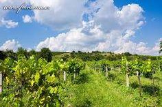 Vineyard, Outdoor, Outdoors, Vineyard Vines, The Great Outdoors