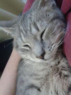 Mi gatito jimmy lo recogí de la calle con una gran infeccion en el ojo y despues de visitar al veterinario ya está muy bien