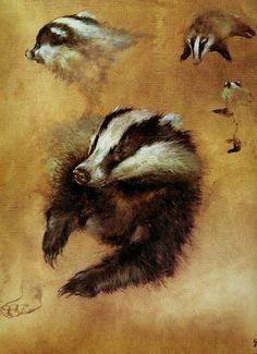 Rien Poortvliet(1932 – 1995)- Oil studies of a European Badger (Meles meles).
