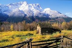 Wilderness Bus Tours. Bella Coola Grizzly Tours