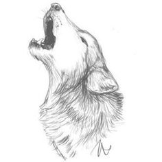 Howling Wolf Sketch Drawing Coloring Page