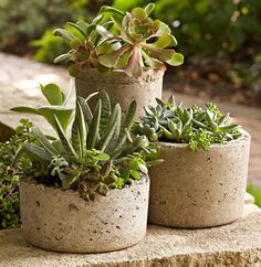 Make cement pots with this tutorial.  AND 45 of the BEST Home Organizational & Household Tips, Tricks & Tutorials with their links!! Party and event prep, too! from MrsPollyRogers.com