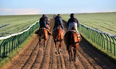 On the Newmarket gallops.