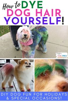 In addition to showing you how to do it, and giving you 30 fun DIY dog fur dye ideas, we've got 8 must-see tips you should read BEFORE you attempt to dye dog hair yourself at home. Like... have you thought about what you're going to do when your dog does a full-body shake with wet brightly colored dye in their fur?!
