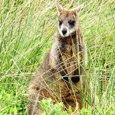 Walk Port Fairy #Walibi#Iseland#Wildlife#Close#Animals#Nice#Portfairy#Walking#Nature#Australia by debbieeexx