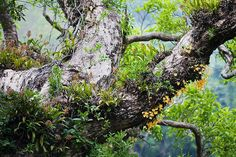 two kinds of orchids growing on a tree