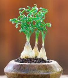 Photo extraite de Ces 10 plantes d'intérieur tellement dingues qu'elles semblent venues d'ailleurs (10...