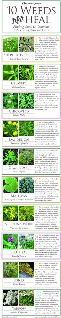 10 common weeds that can Heal you!