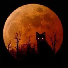 Halloween - Black cat and a harvest moon Chat Halloween, Holidays Halloween, Vintage Halloween, Halloween Decorations, Halloween Moon, Halloween Pictures, Halloween Night, Halloween Black Cat, Samhain Halloween