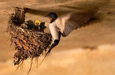 Lijstje van de week:6x vogels die een architectuurprijs verdienen. #vogelnest #kunst #lijstje