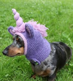 Knitting Pattern for Unicorn Dog Hood - Unicorn costume designed to fit miniature dachshunds but I imagine you could adapt to other breeds.