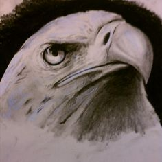Charcoal sketch eagle by Cohen Bringas Eagle Sketch, Eagle Drawing, Charcoal Sketch, Joseph, Paintings, Bird, Eyes, Drawings, Animals