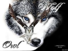 The Wolf and Owl     http://pinterest.com/AuroraBorealice/