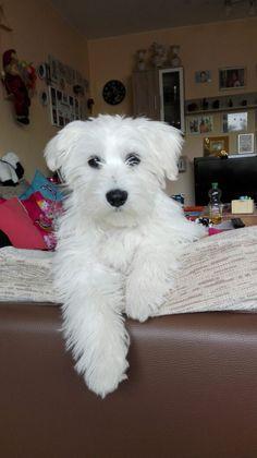 Hunde Foto: Nicole und Mac - Spielst du jetzt endlich mit mir Hier Dein Bild hochladen: http://ichliebehunde.com/hund-des-tages  #hund #hunde #hundebild #hundebilder #dog #dogs #dogfun  #dogpic #dogpictures