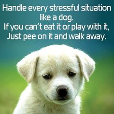 Handle every situation like a dog! If you can't eat it or play with it, just pee on it and walk away.