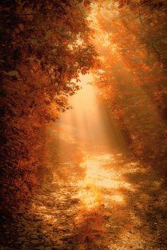 #autumn #fall #beautiful #gold #sun #wow