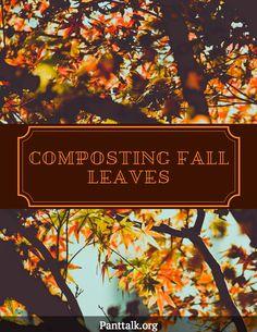 Don't know what to do about those leftover leaves? Let us help. Colorado State University, Composting, Autumn Leaves, Gardening Tips, Fall, Plants, Autumn, Fall Leaves, Autumn Leaf Color