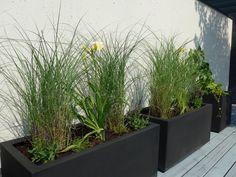 Chinaschilf und Taglilien auf einer Dachterrasse Klagenfurt, Garden Ideas, City, Flowers, Plants, Day Lilies, Roof Terraces, Lawn And Garden, Cities