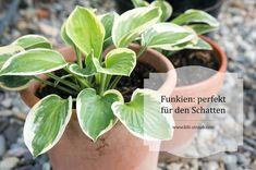 9 besten Garten/ Pflanzen Bilder auf Pinterest | Balkon ...