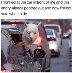 42 Hilarious Animal Memes That Are So Cute You're Gonna Die - Memebase - Funny Memes Cute Animal Memes, Animal Jokes, Cute Funny Animals, Funny Animal Pictures, Animal Memes Clean, Stupid Animals, Stupid Funny Memes, Funny Relatable Memes, Haha Funny