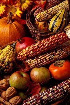 Maiskolben / Corncob + Bunter Mais / Colorful Corn + Kürbisse / Cucurbita + Apfel / Apple + Walnuss / Walnut