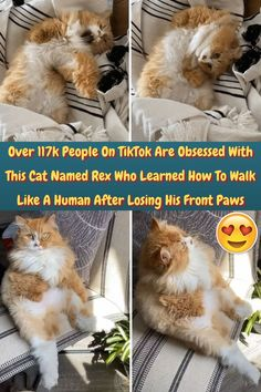 #TikTok #Obsessed #Cat #Named #Rex #Walk #Human #Losing #Front #Paws Photography Pics, Nature Photography, Pretty Cats, Cute Cats, Diy Jewelry Wall, Hip Hop, Pretty Nail Colors, Stylist Tattoos, People Fall In Love