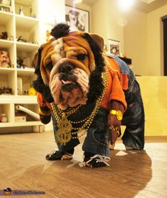 Mr T Doggie Dog - DIY Halloween Costume | Milo a 2.5 yr old English Bulldog as Mr T Doggie Dog. The look was inspired by a picture I found online of a Mr T doll. #buldog