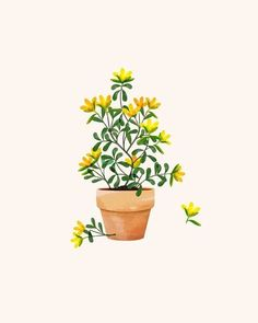 Yellow flower in terracotta pot , illustrate , watercolor Easy Watercolor, Watercolor Flowers, Watercolor Wallpaper, Painted Flower Pots, Photo Wall Collage, Sketch Painting, Simple Backgrounds, Pretty Wallpapers, Aesthetic Iphone Wallpaper