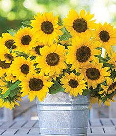 Yellow and brown flowers in a bucket