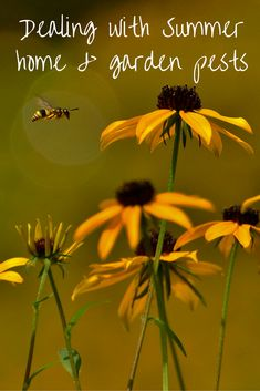 Tips and ideas on how to make sure your home and garden isn't a prime location for pests during the Summer.