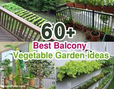 Are you looking or search best ideas for your home balcony. Find the Best Balcony Vegetable Garden ideas 2020 UK. Small Vegetable Gardens, Vegetable Garden For Beginners, Garden Ideas To Make, Kitchen Pictures, Balcony Garden, Shade Garden, Container Gardening, Garden Design, Outdoor Structures