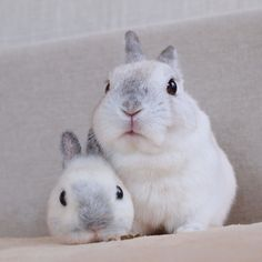 We provide Thousands of cute animal pictures, gifs, videos on demand! Funny Bunnies, Baby Bunnies, Cute Bunny, Cute Baby Animals, Animals And Pets, Funny Animals, Puppy Care, Pet Puppy, Pet Dogs