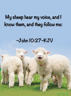 My sheep hear my voice, and I know them, and they follow me: