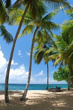 #Martinique, Anse l'Etang
