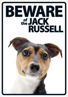 Beware of the Jack Russell